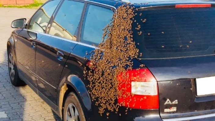 Bienen besetzen Auto