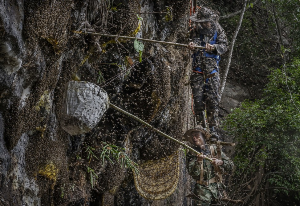 *** BESTPIX *** Yunnan Honey Hunters Scale Cliffs For Liquid Gold