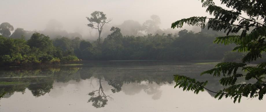 Regenwald-Landschaft entlang des Amazonas in Brasilien.