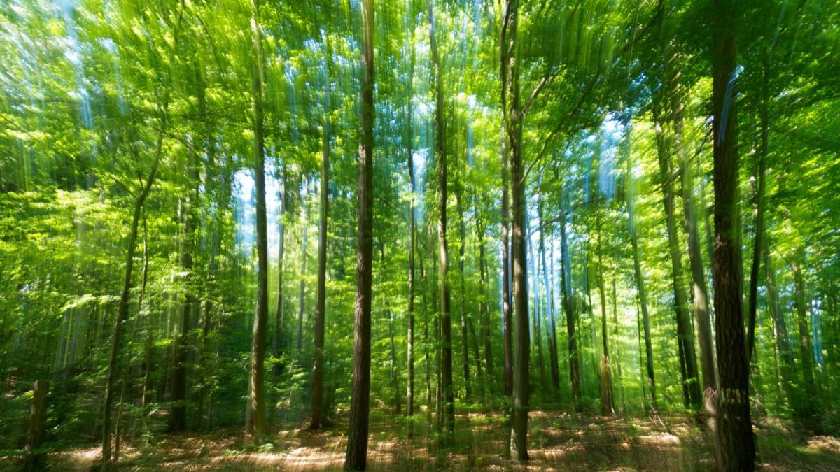 Bayern - Staatsregierung weist Waldschutzgebiete aus