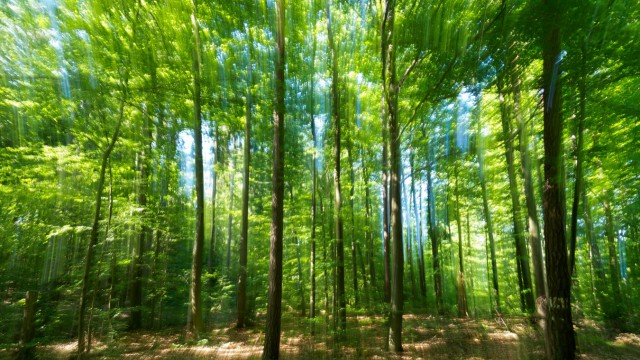 Hitze in Bayern - Waldbrandgefahr