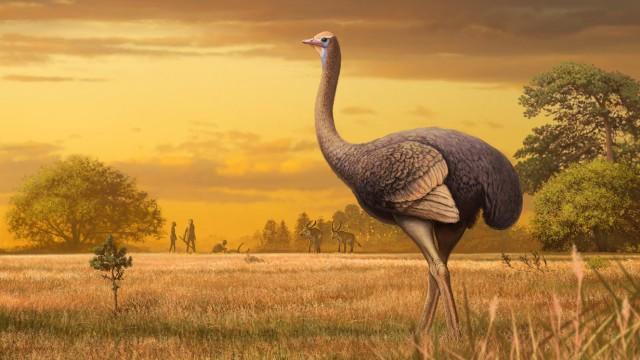 Riesenvogel aus der Eiszeit