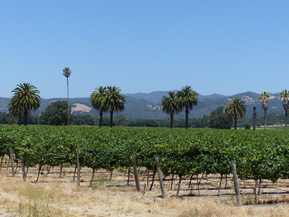 Im Sonoma Valley in Kalifornien wird Wein angebaut.