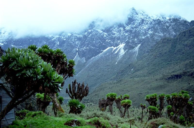 Die Gipfel des Ruwenzori-Gebirges sind vergletschert.
