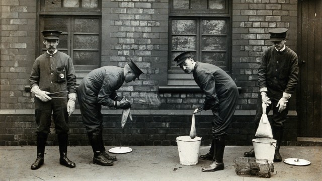 Liverpool Port Sanitary Authority rat-catchers dipping rats in buckets of petrol to kill fleas for plague control. Liverpool, England. Photograph, 1900/1920. Credit: Wellcome Collection. CC BY