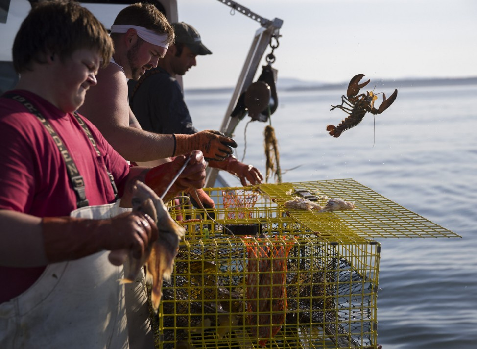 Maine's Lobster Industry Benefits From Rising Ocean Temperatures