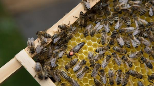 Bienenzucht, 2019