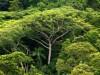 Studie: Bäume können das Klima retten