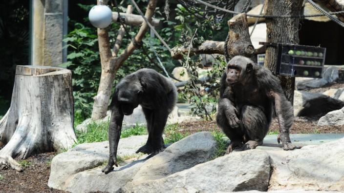 Affen im Münchner Tierpark Hellabrunn
