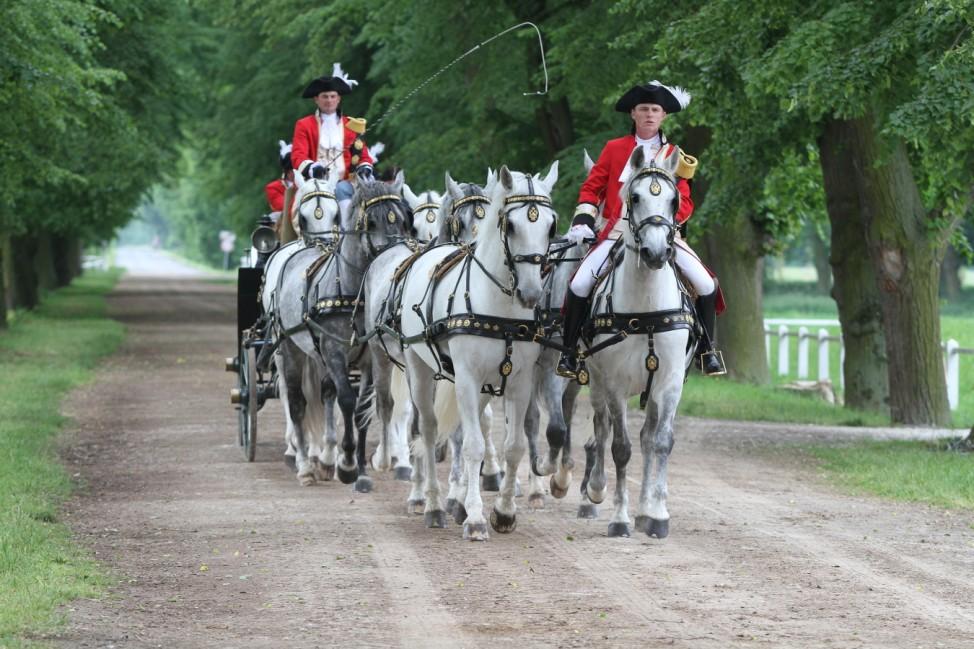 Équipe de huit chevaux dans l''avenue Recanská.; Gestüt Kladruby nad Labem Kladruber Unesco Welterbe