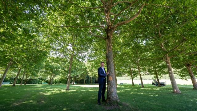 Markus Söder mit Baum