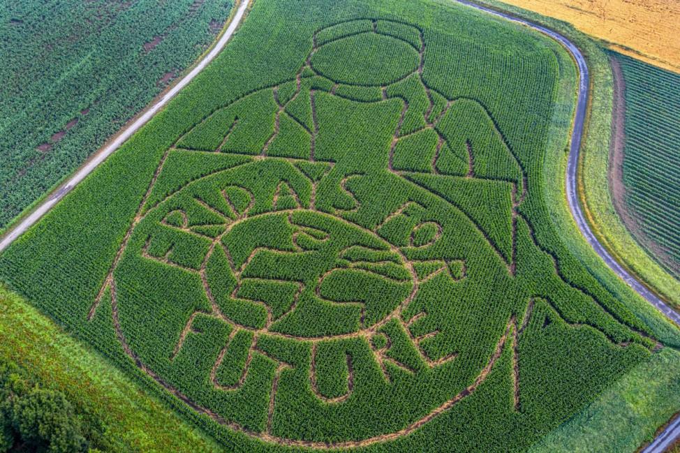 Fridays for Future Schriftzug in einem Maisfeld