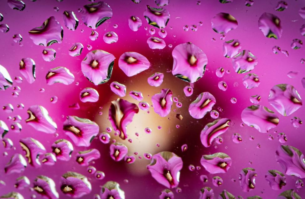 Hibiskus hinter regennasser Fensterscheibe