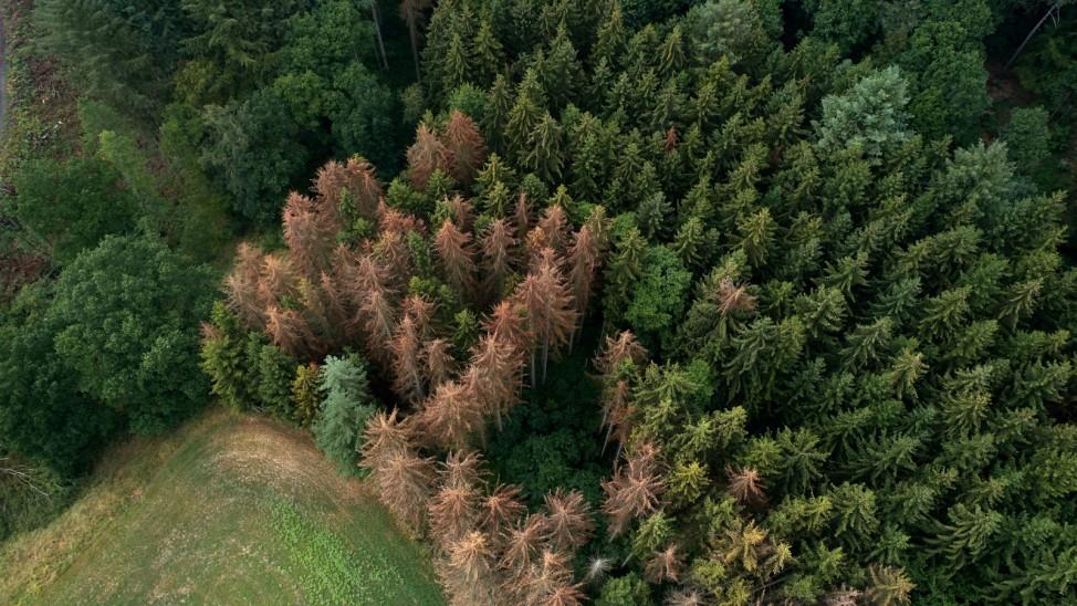 Resistentere Baumarten gegen Waldsterben