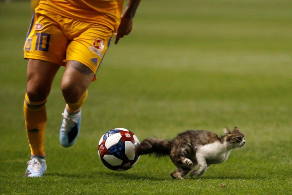 MLS: Leagues Cup-Tigres UANL at Real Salt Lake