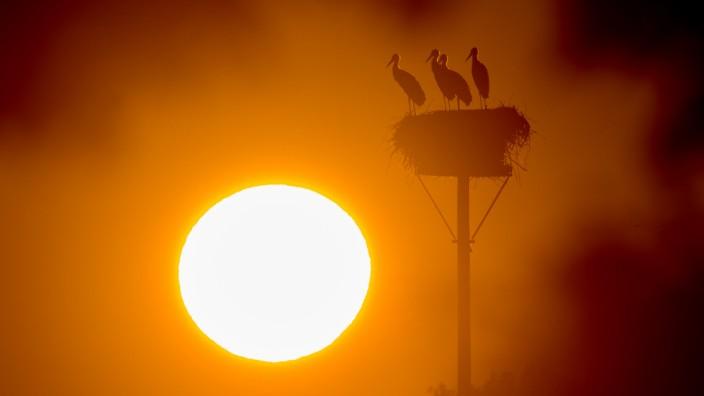 Hitze - Sonnenaufgang in Brandenburg