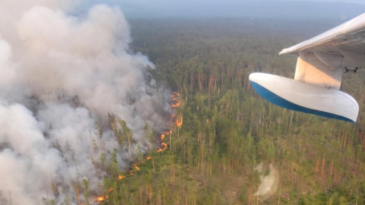 waldbrände sibirien