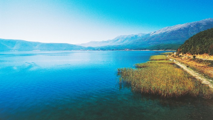 Reeds along the shore of Lake Prespa
