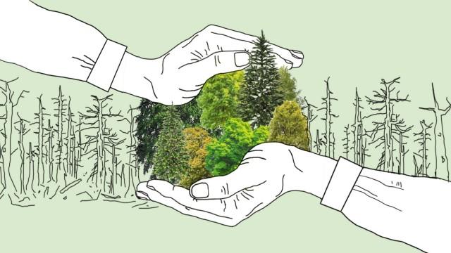 Thema der Woche, Waldsterben
