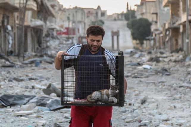 Der Katzenmann von Aleppo
