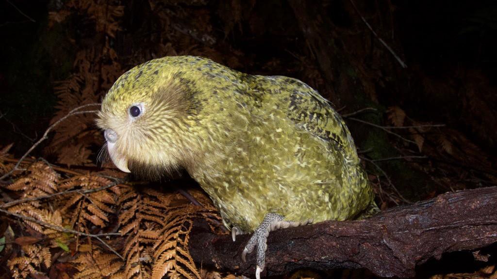 Neuseeland: Vögel brauchen Millionen Jahre zur Erholung