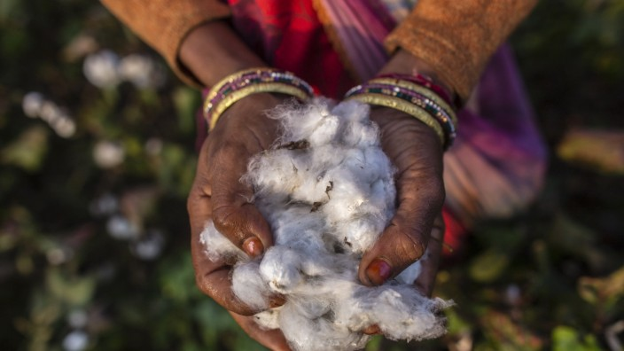 Cotton Harvest, Auction And Mill As India Heads For A Record Crop