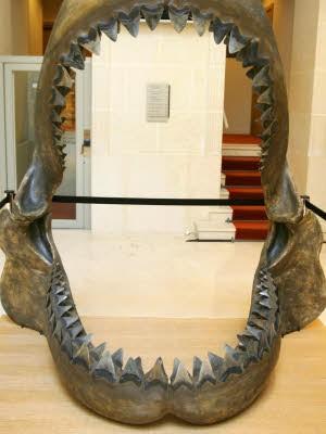 AP, Carcharodon Megalodon