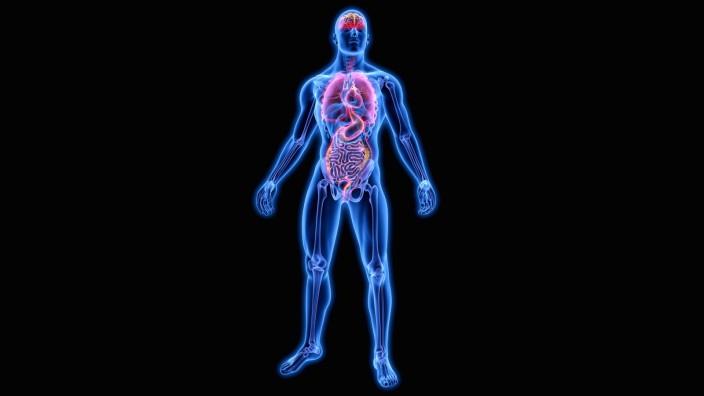 Beleuchtete Organe in blauem anatomischen Modell PUBLICATIONxINxGERxSUIxAUTxONLY OliverxBurston 1010