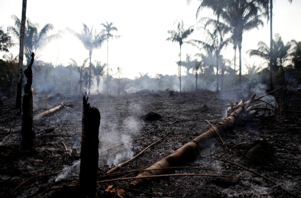 A charred trunk is seen on a tract of Amazon jungle that was recently burned by loggers and farmers in Iranduba