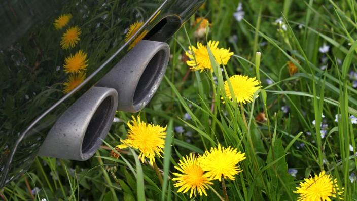 Auspuff hinter Blumenwiese