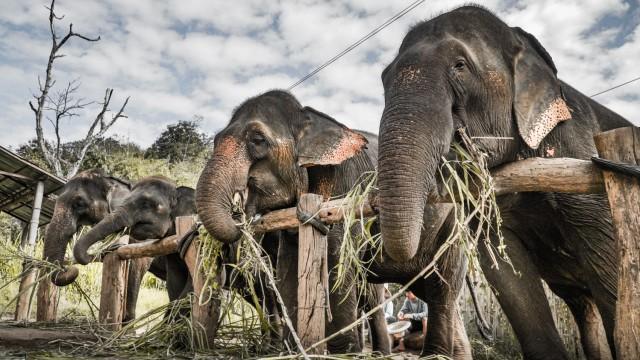 Elefanten in einem Park in Chiang Mai, Thailand