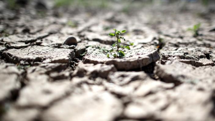 Trockener Boden am Rhein