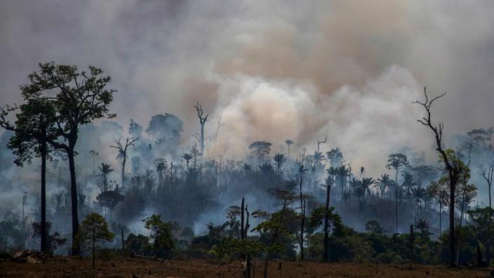 Brände in Brasilien: Nach dem Feuer bleibt nur verbrannte Erde, wie hier bei Altamira. Ein kleines Schlachtfeld in einem viel größeren Krieg.
