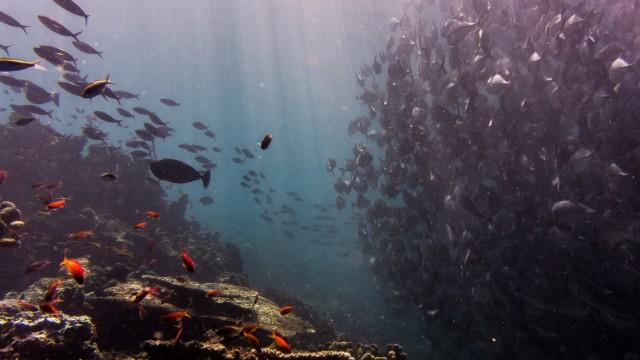 Ozean Wissen