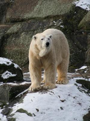 Knut Lars