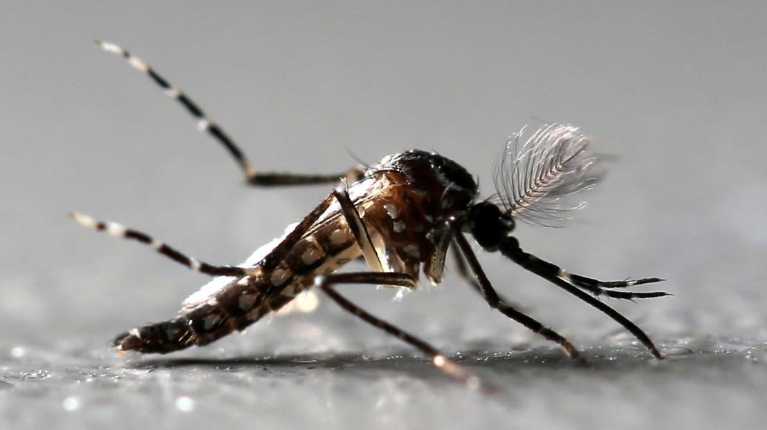 Biologie: Streit um Milliarden Gentech-Insekten