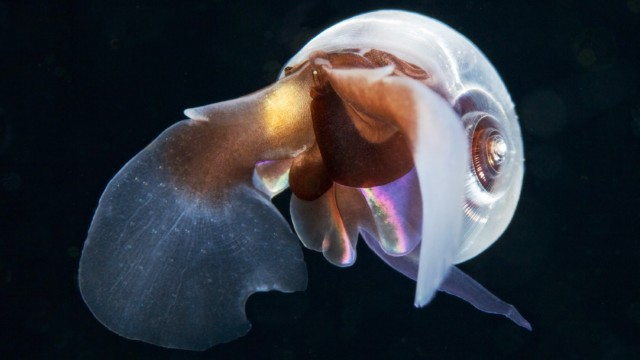Young scientists plan an epic three-year underwater odyssey to explore extraordinary creatures, Marmaris, Turkey - 16 May 2014