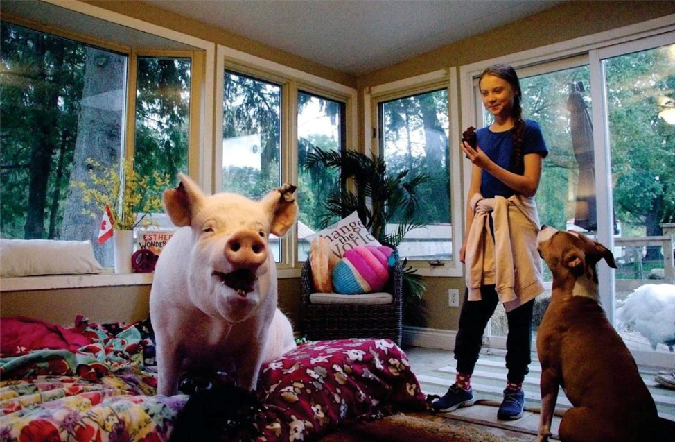 Swedish environmental activist Greta Thunberg meets Esther the Wonder Pig during her visit to Esther's animal sanctuary in Campbellville, Ontario