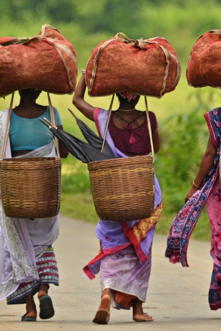 Workers carry sacks of tea leaves at a tea estate in Nagaon district