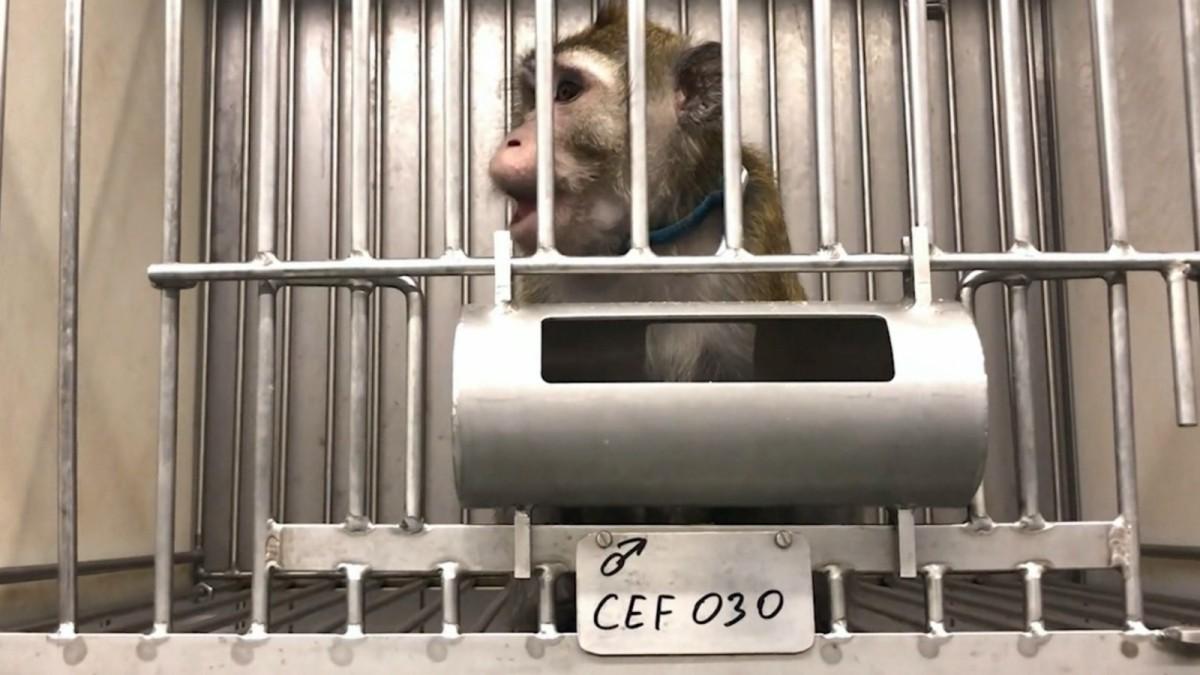 Versuchslabor LPT darf keine Tiere mehr halten