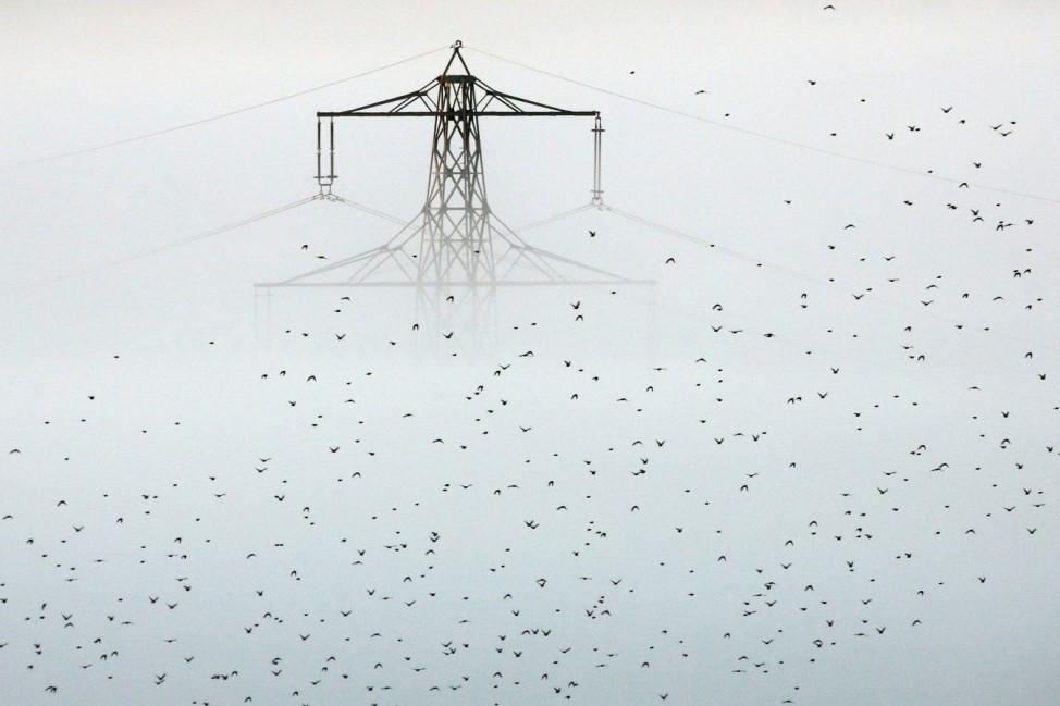 Vogelschwarm im Morgennebel