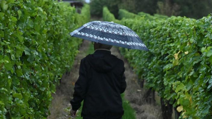 Regenwetter im Weinberg