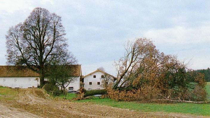 """Ausstellung im Kloster Beuerberg: Wo ein Baum nur steht, heißt es in der aktuellen Ausstellung """"Grün kaputt"""", überall steht er im Weg, vor allem dem Fortschritt."""