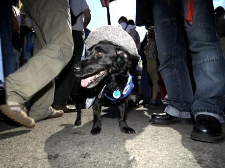 Kuriose Fundstücke: Hund; Rumpf