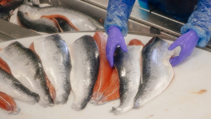 Salmon Fishery As Norway Protects Fish Farmers From Russia Ban
