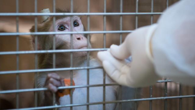In Bayern wird fast jeder Tierversuch genehmigt