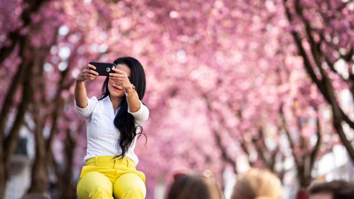 bonn kirschblütenallee