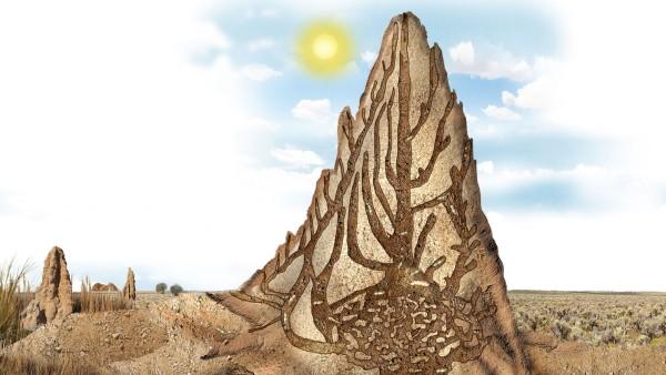 Termiten Wissen