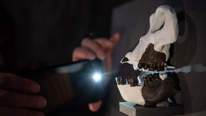 Vorstellung Fossilien-Funde in Tübingen