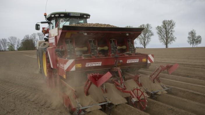 Bauer Willi Müller setzt Kartoffeln Bauernserie
